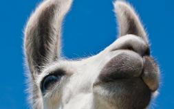 Besuchergewinnung Freizeitpark / Zoo
